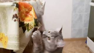 funny cat fails \ веселая кошка терпит неудачу
