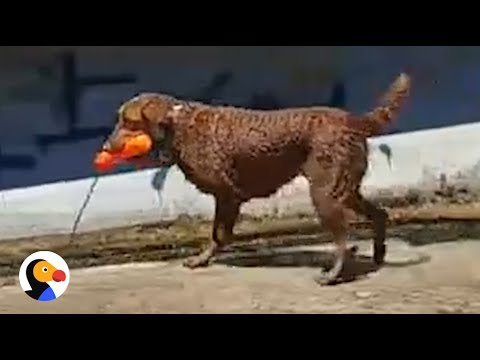 Dog Plays Catch with Himself | The Dodo