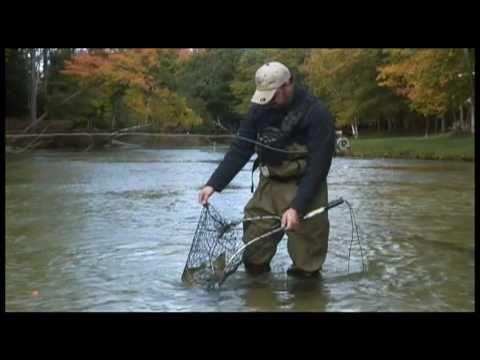 Salmon Fishing On Michigan's Platte River