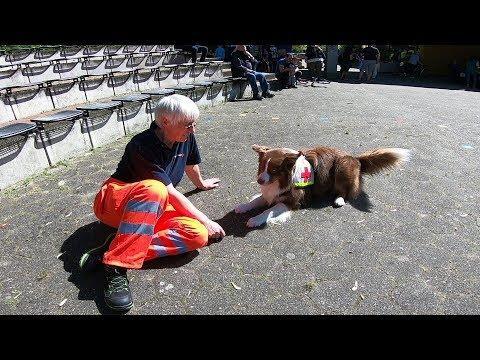 Rettungshundestaffel des DRK-Recklinghausen , Deutsches Rotes Kreuz