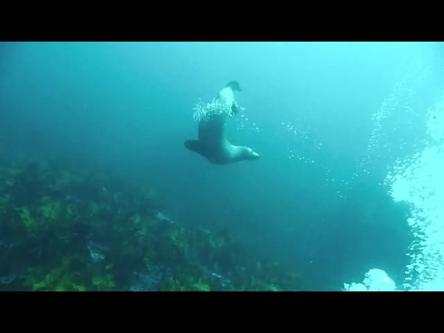 OzDive in Australia - Diving in Jervis Bay  (2011)