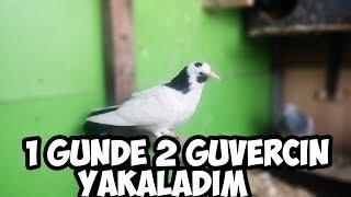 1 Günde 2 Güvercin Yakaladım !!! (Muhteşem)