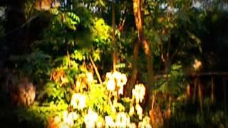 Копия видео Веревочная лестница монахов (Таиланд)(Веревочная лестница монахов (Таиланд), 2015-03-10T15:41:19.000Z)