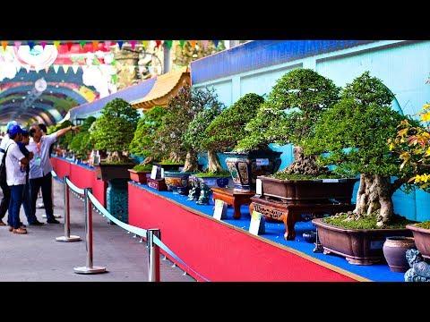 Bonsai Exhibition Vietnam -15th ASPAC - (Asia Pacific Bonsai And Suiseki Bonsai Exhibition) Part 1