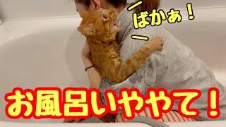 ビビり猫をお風呂に入れたら泣き叫んでしまいました。