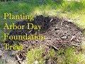 Planting Arbor Day Foundation Trees ~ Homestead Corner