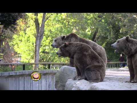 Ursii de la Zoo - Ca romanu' ©