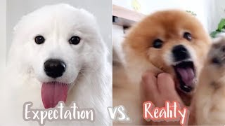 ENG Sub] expectation vs reality  dogs greet when you come home from work