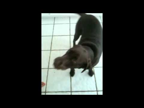 Dog Sings Its Peanut Butter Jelly Time