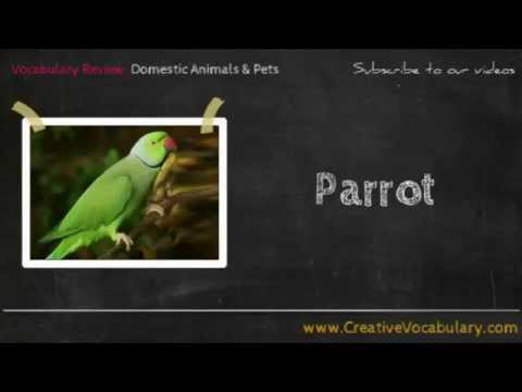 Domestic Animals & Pets Vocabulary Picture Video Lesson -  Learn List of Domestic Animals & Pets - 2