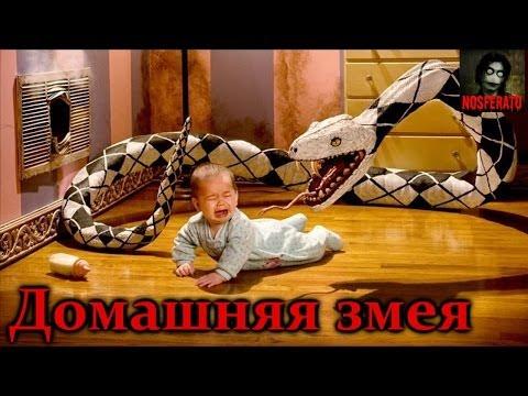 Истории на ночь: Домашняя змея