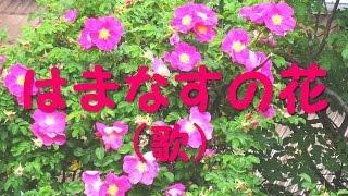 はまなすの花(歌)/(Song for a Japanese rose)/渡  健