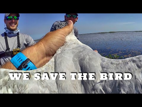 We SAVED This Bird from Death!