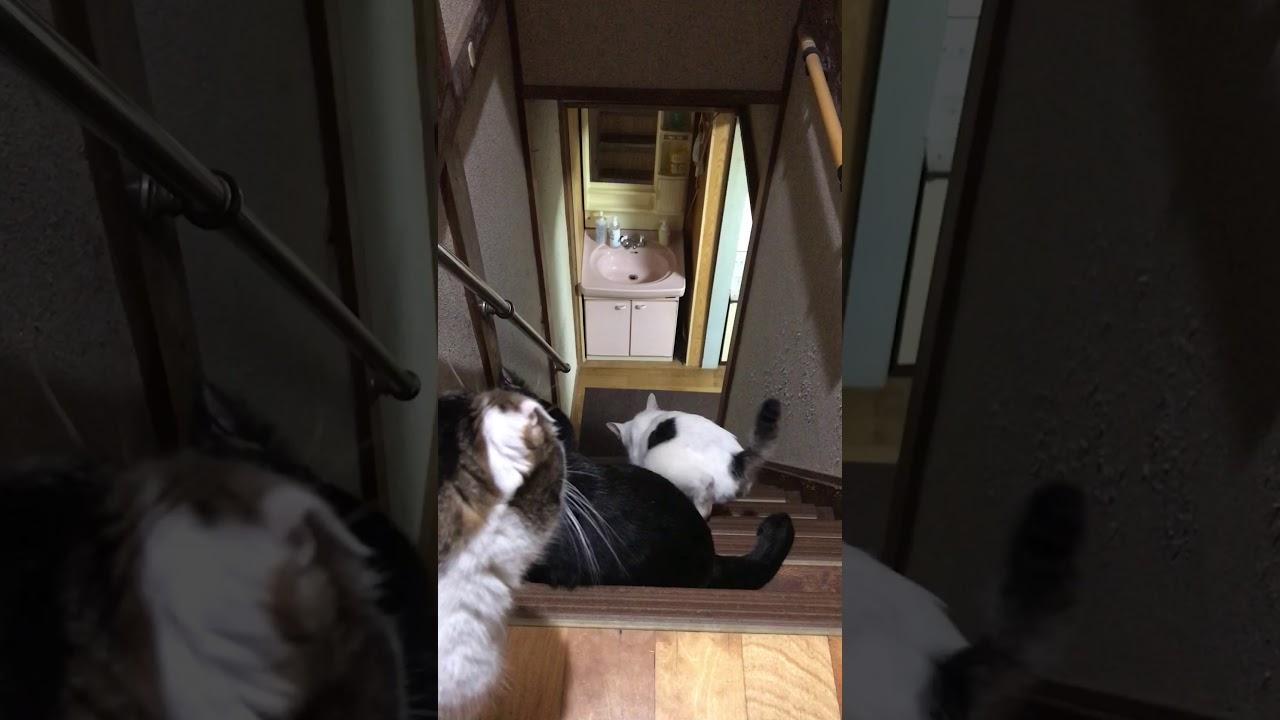猫家 階段を降りるカワイイお尻たち R3.03.01 【日常のひとコマ】 #Shorts