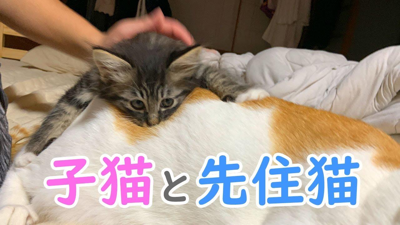 子猫と先住猫の相性チェック