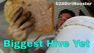 Celebrity House Double Bee Hive Removal