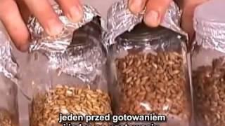 3 7 Prosty sposób uprawy grzybów napisy PL