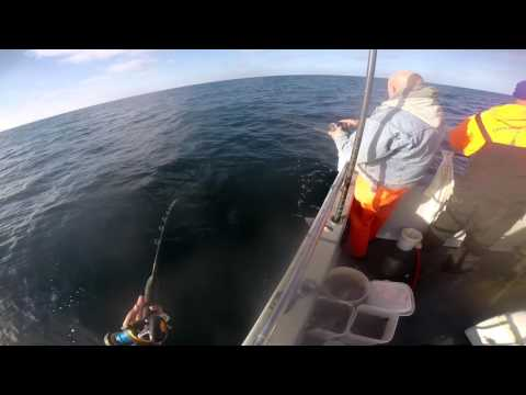Offshore Black Sea Bass trip