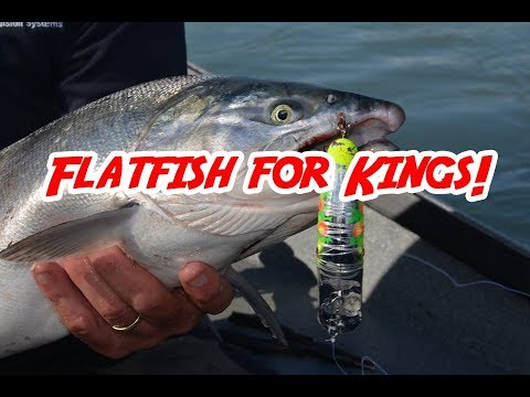 Flatfish For Kings