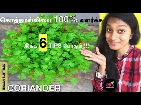 kothamalli valarpu tips in tamil | கொத்தமல்லி கீரை வளர்ப்பு |grow coriander| Veetu(Maadi) thottam