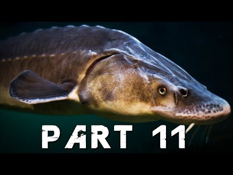 FAR CRY 5 Walkthrough Gameplay Part 11 - THE ADMIRAL FISH (PS4 Pro)