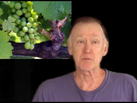 Introduction to grape growing