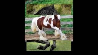 صور اجمل خيول عربي