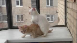 Кошки. 112ч.  Котята на балконе