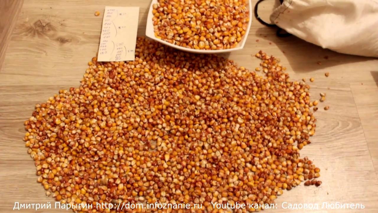 Кукуру́за са́харная, также маи́с (лат. Zéa máys) — однолетнее травянистое культурное растение, единственный культурный представитель рода кукуруза (zea) семейства злаки (poaceae). Помимо культурной кукурузы, род кукуруза включает четыре вида — zea diploperennis, zea perennis, zea luxurians,