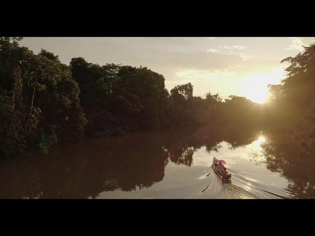 Drone in the Amazon Jungle of Peru