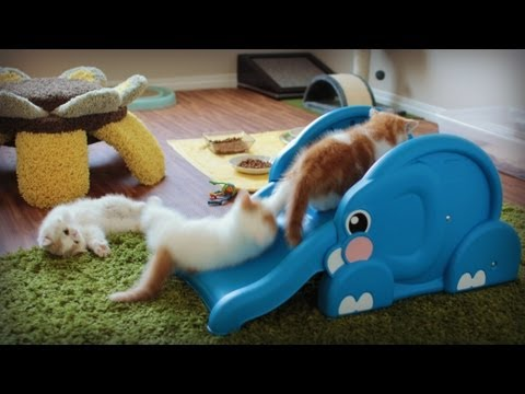 Thumbnail for Cat Video Kittens Slide Down Elephant's Trunk