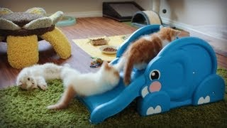 Kittens Slide Down Elephant
