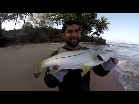 The BEST Place For Inshore Fishing In The Caribbean - Catching Snook In Tobago Off The Beach