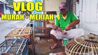 Download Video GREBEK PENJUAL BURUNG MERPATI MURAH #MERPATIKU MP3 3GP MP4