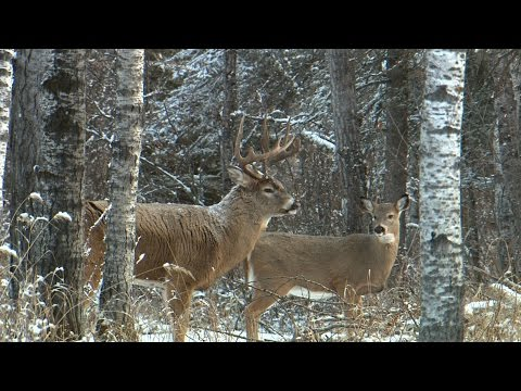Saskatchewan Deer Hunting with Jim Benton Chambered for the Wild 2015