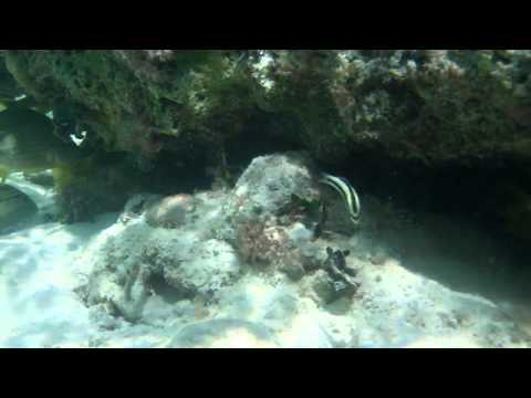 Marine Fishes Fish Species In HD Caribbean