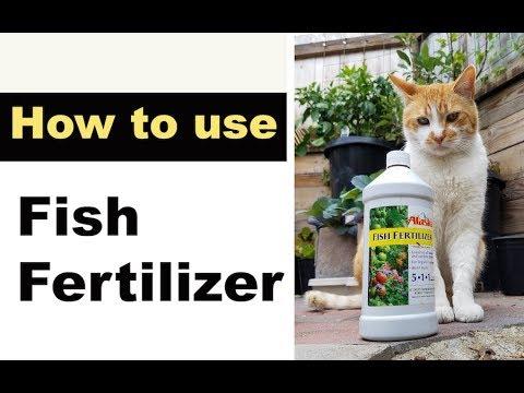 How To Use FISH FERTILIZER In Garden