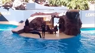 Tenerife 01 Loro Parque 01