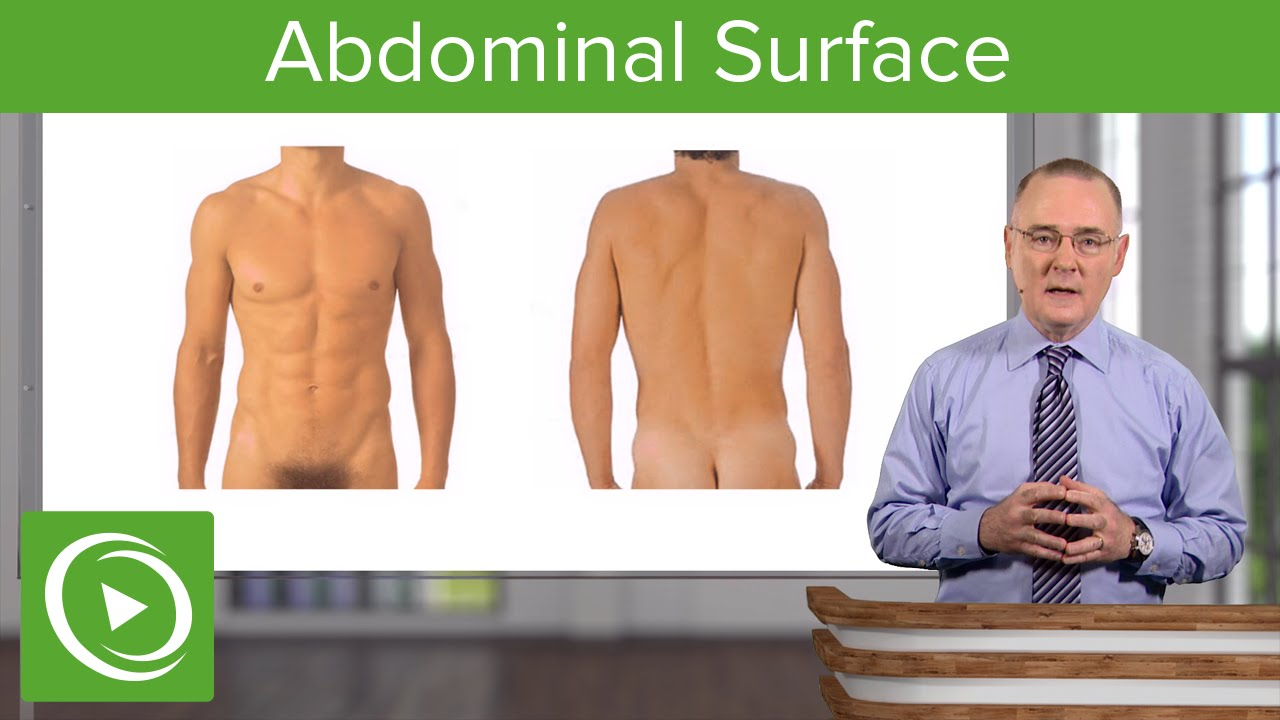 Surface Anatomy of the Abdominal Wall – Anatomy | Lecturio