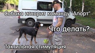 Собака игнорит команду апорт, что делать, Тактильная стимуляция