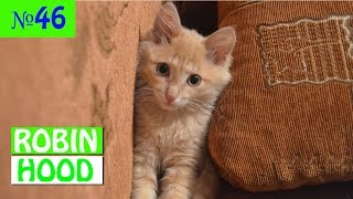 ПРИКОЛЫ 2017 с животными. Смешные Коты, Собаки, Попугаи // Funny Dogs Cats Compilation. Март №46