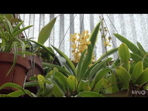 Orchid greenhouse|Monica Gaylord|Central Texas Gardener