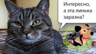 Затянулась линька у кошки / собаки, возможные причины