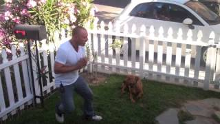 The Good Dog Minute 6/20/13: Obie, Leash Aggression And Indoor Redirection Transformed!
