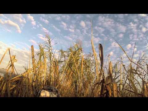 South Louisiana Duck Hunt Jan 2015