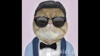Śmieszne koty 2013 r