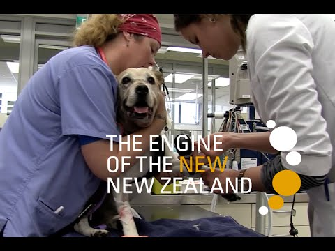 Veterinary Science | Massey University
