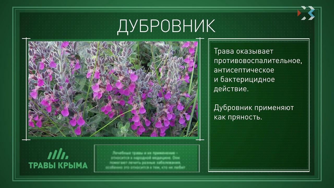 мармарисе, лекарственные травы крыма фото и описание крыму каждый год