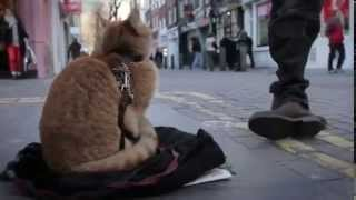 James Bowen shares the story of finding Bob the Cat