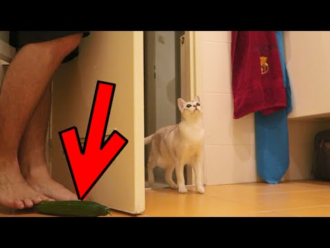 CAT VS CUCUMBER PRANK FAILS!!